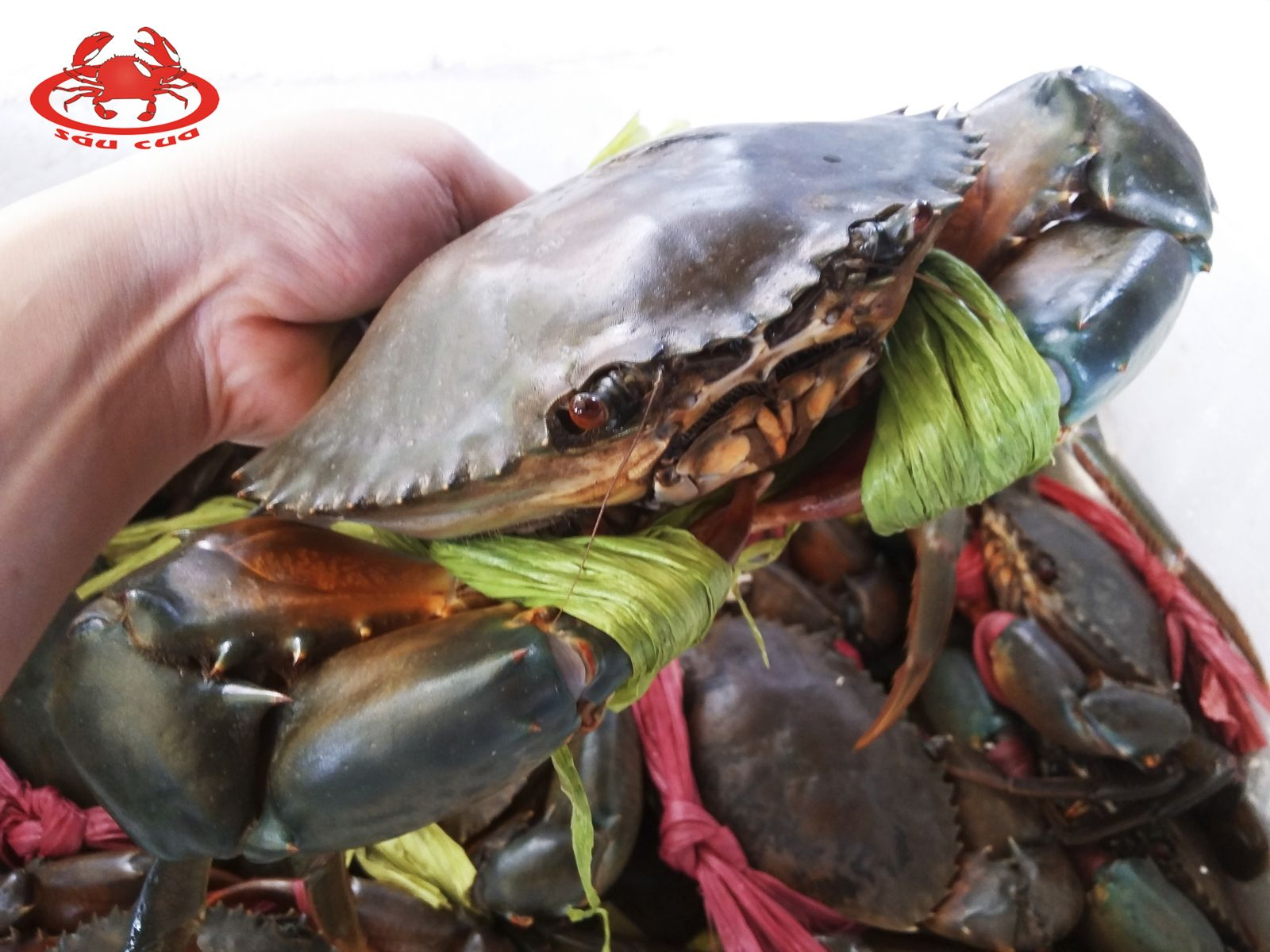 Cua Cà Mau được xem là một trong những loại cua thơm ngon bậc nhất